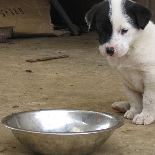comederos para perros en venta