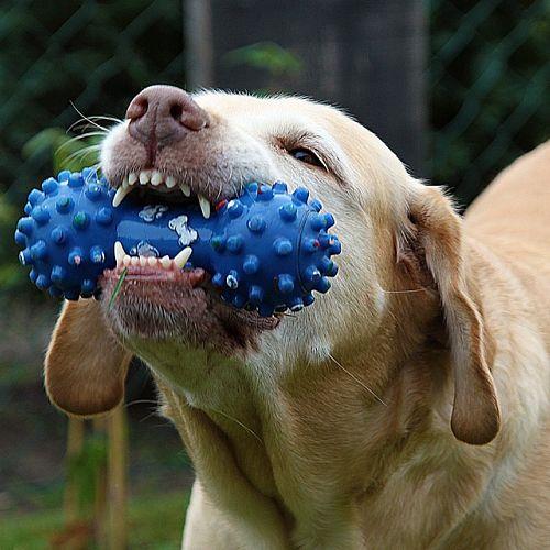Venta de juguetes para perros